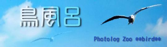 鳥風呂(鳥専用ブログです)